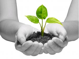 aarde-plantje-handje